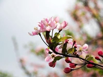 心中的花_开在心中的花朵_800字