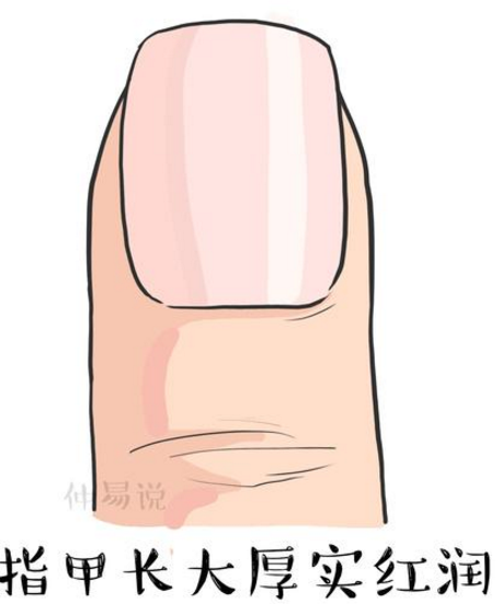 四种指甲形状看命运