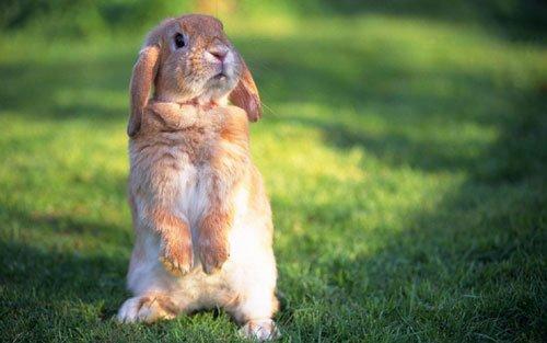 兔年大起大落之生肖