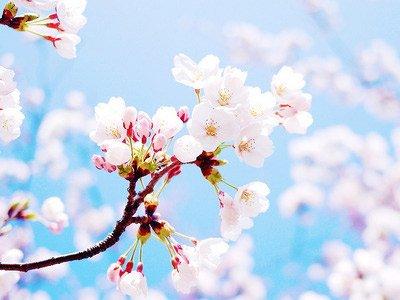 12星座三月桃花指数