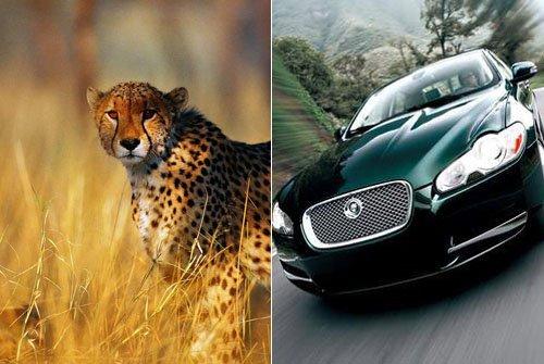 动物与车的情缘 汽车世界的仿生学趣谈