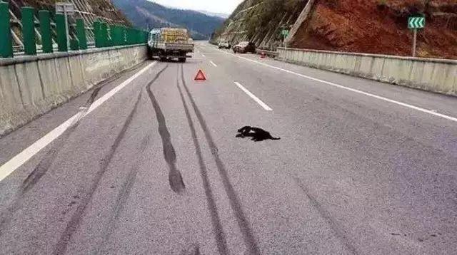 高速上碰到石头 是躲还是撞
