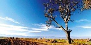 春季自驾指南:到川藏与南疆驱车撒欢