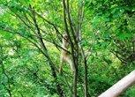 野生小猴子第一次见