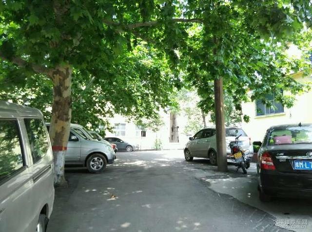 這些樹下千萬別放車 否則會導致永久性戕害