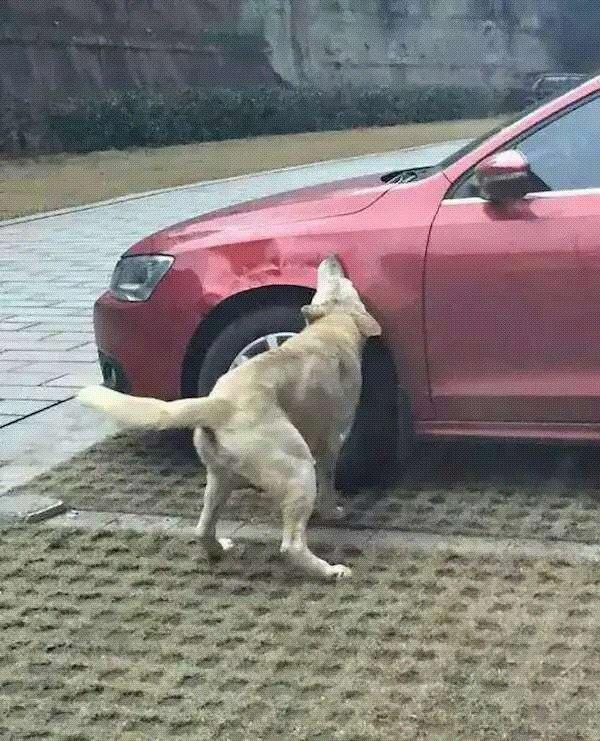 车撞狗 狗撞人 这起连环事故到底谁该负责