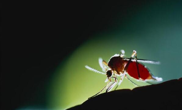 蚊虫滋扰真的烦 实用方法教你对抗蚊虫大军