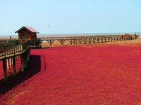 大连红海滩