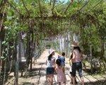 自然形成的凉棚