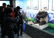 媒体参观大熊猫博物馆
