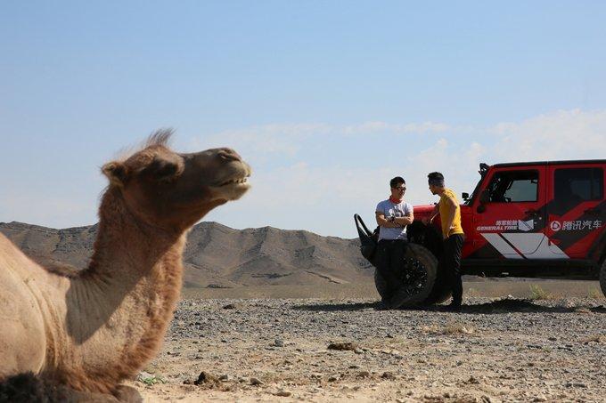 路遇友善的动物朋友――骆驼