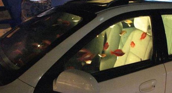 猜车!把鱼养在汽车内 凯越/福克斯?