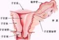 产后这样做可以促进子宫的恢复