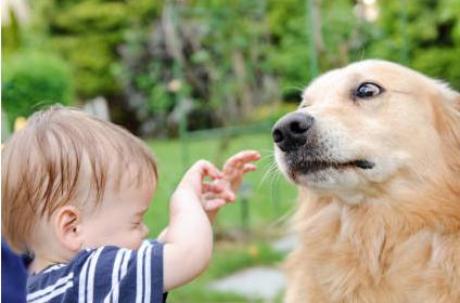 """zooskool八狗一女-恐惧事件之七:怕动物   """"小狗快走开,别靠近我,你会咬我,会吃掉"""