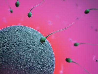 揭秘!精子在女人体内存活多久