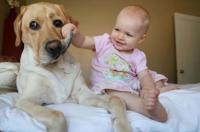 快速应对宠物对宝宝的意外伤害