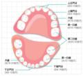 宝宝乳牙不掉恒牙不出是何因?