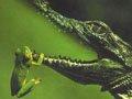 深夜行船亚马逊河 追踪神秘黑凯门鳄