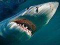 """""""大白鲨""""的幕后故事 海洋中的无敌王者"""