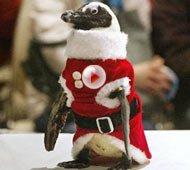 日本企鹅变身圣诞老人送祝福