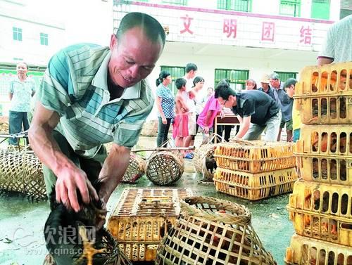 欽州產業扶持貧困村