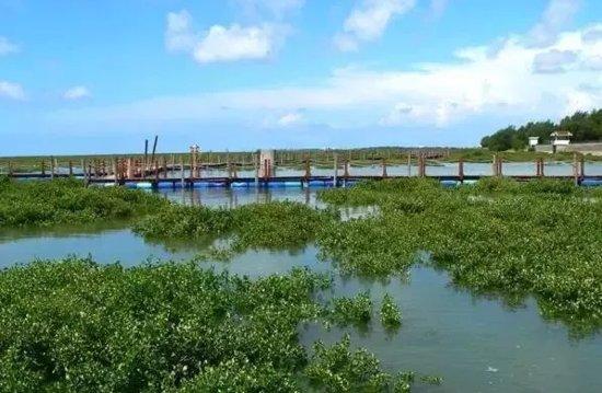 北海城市湿地公园管理办法出台 城市之肺添保护伞