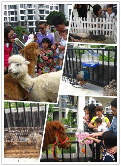 萌宠草尼玛最受众人青睐-中安止泊园动物园火爆开园 宠物集聚萌翻全城