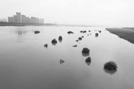 淮河蚌埠段水位上涨明显_频道-蚌埠