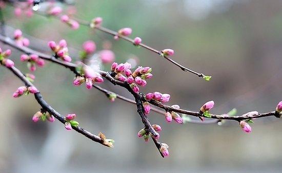 春风十里不如你 高性价比园林美宅莫失良机