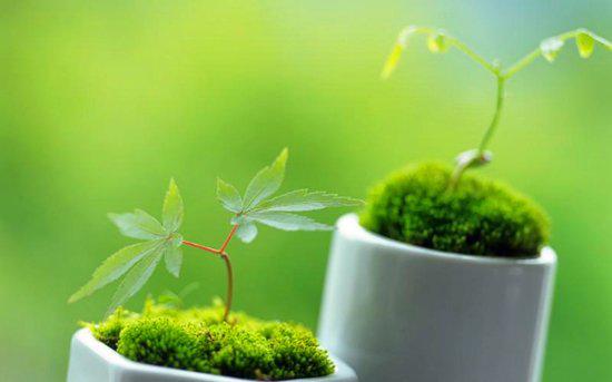 万象新天·尅街:周末免费领绿植 赶快来吧!