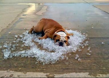 从今天开始 教你如何躲避蚌埠酷热的夏天