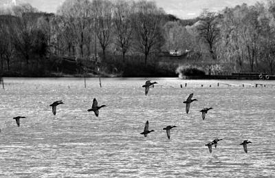 碧波寻羽集体拍摄走进翠湖湿地