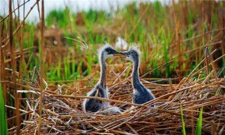 目之所及皆是风景 这个春天去宁夏沙湖观百鸟