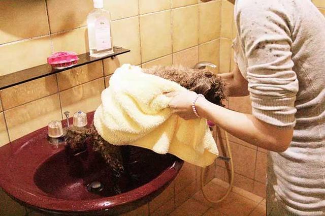 13步教你给狗狗洗澡