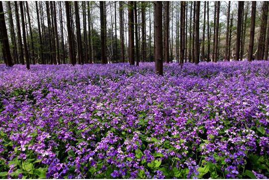 春分 带最爱的人赏最美的花