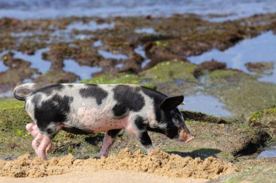 世界上生活着可爱动物的15座岛屿 - 油乐园 - 一加