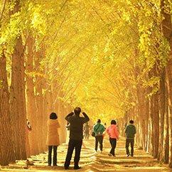 大光圈一周精选(2015.10.26-11.1)