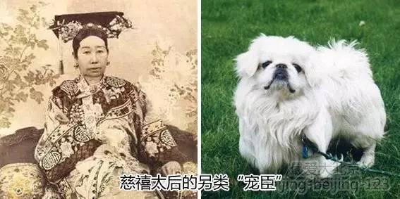 明清皇帝的另类嗜好