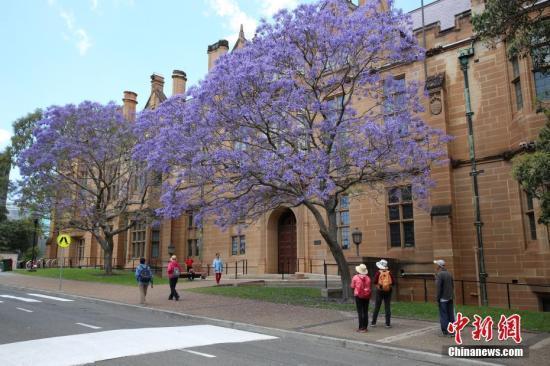赴澳国际留学生伪造成绩屡禁不止