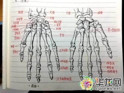 军校学霸做笔记手绘骨骼图