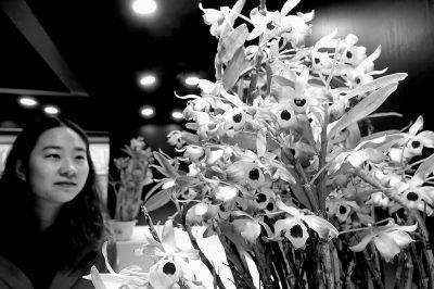 植物园兰花展明天开幕
