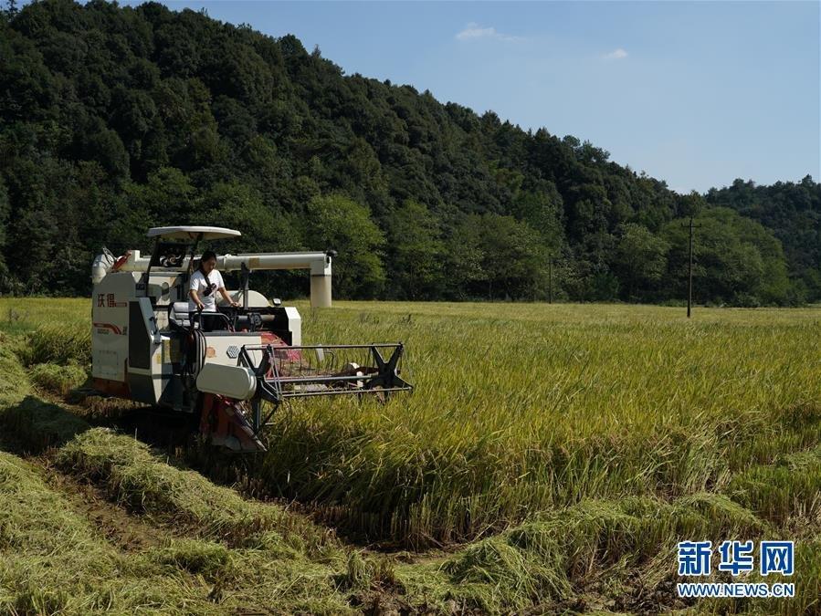 承包稻田走上致富路