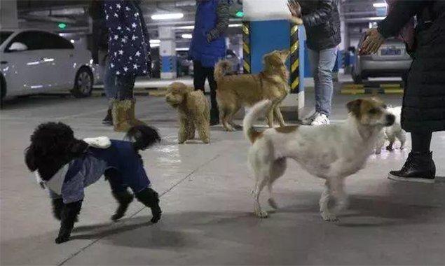 北京某小区地下车库变遛狗场!您的小区有没有?