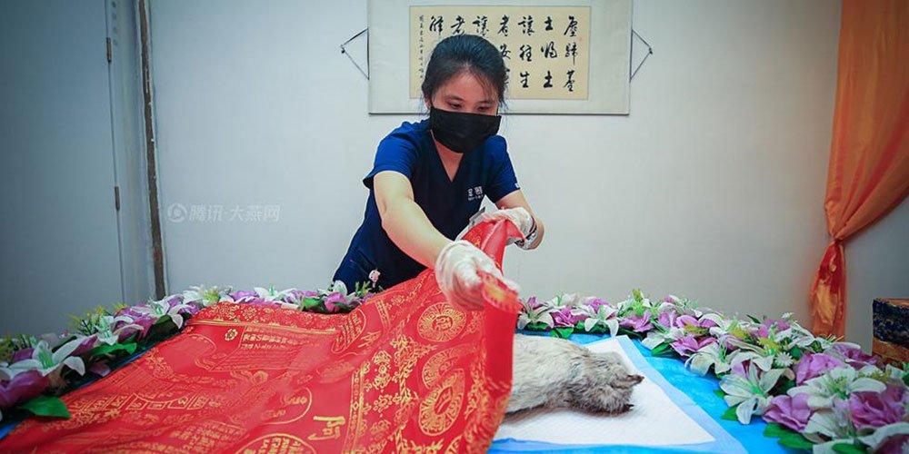 【燕女郎】北京首位女性宠物殡葬师:这行找男友不容易