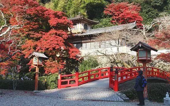 又到一年赏枫季 教你看遍日本万种枫情