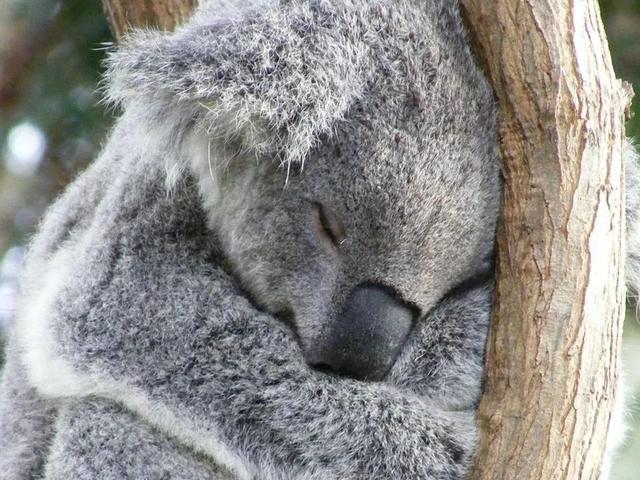 澳大利亚与新西兰独有的奇境 不玩不算到过澳新
