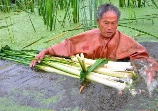 童年时常在水边见到的这种草竟然是珍馐美味?