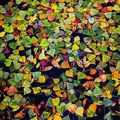 影友10月作品精选 | 缤纷是秋的礼赞