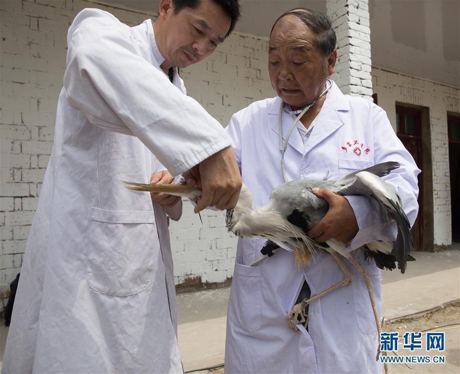 七旬老人的候鸟守护事业