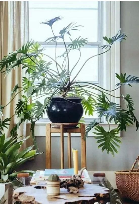 让家清新自然 学学软装绿植搭配法则